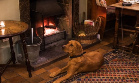 Dog Friendly Holiday Cottages Exmoor Somerset Pet Accommodation