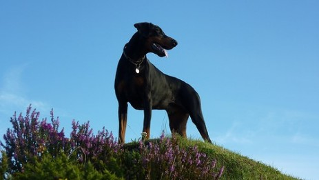Dog Friendly Cottages Exmoor